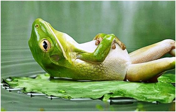 Funny Frog Picture: It's Time To Relax