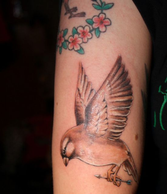 Girls Sparrow Tattoo Designs  For 2011