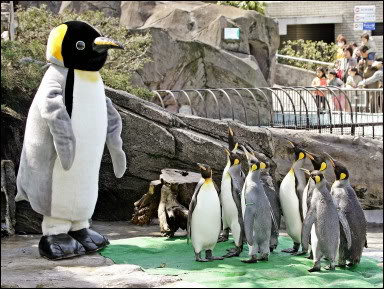 Big Penguin Talking To Small Penguins