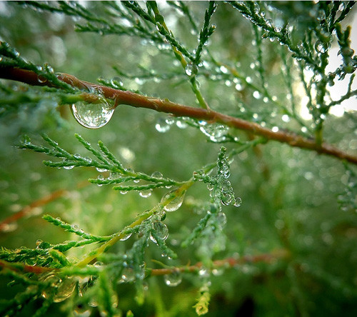 Impressive Examples of Dew Photography