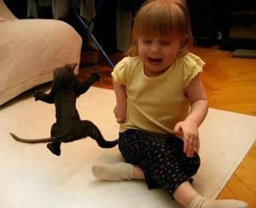 Funny Scaring The Cat