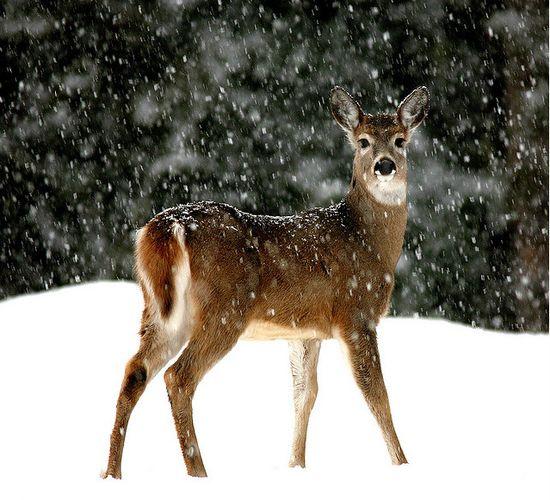 Cute Animals in Snow Winter Season