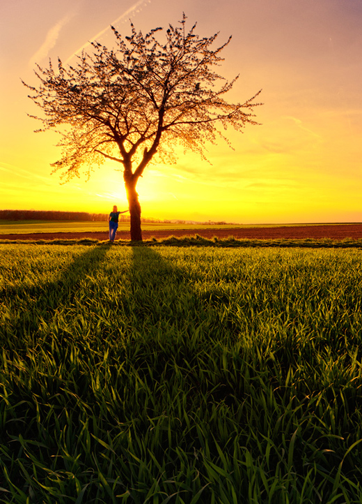 Breathtaking Examples of Tree Photography