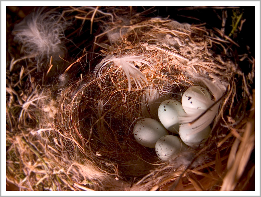 Nests To Rest: Amazing Photography