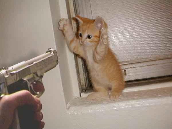 Genius Cat: Please Let Me Go