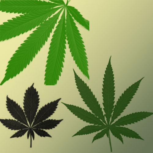 Кисти для фотошоп марихуана скачать марихуана относится растений какому к виду